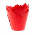 Caissettes tulipe rouge, 36 pièces