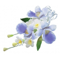 Culpitt - Orchidee spray, approx. 12 cm